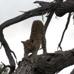 Sanctuary Chief's Camp Foto