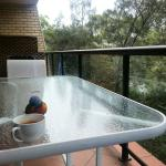Friendly rainbow lorikeet on our apartment's balcony checking out my coffee.