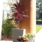 Foto Holiday Inn Express Suites Ocala - Silver Springs