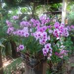 Orchid Hibiscus Guest House Foto
