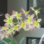 Orchids - just beautiful