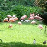 Flamingo Exibit