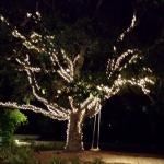 Lit oak tree with swing