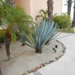 Agave Plants Abound