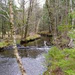Baille Ard Nature Trail