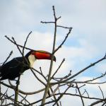 """Toucans outside our window with """"Jungle View"""" room!"""