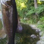 Guest Caught Smallmouth behind the property(Sept. 2014)