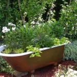 Unique planters--this clawfoot tub was from one of our rooms