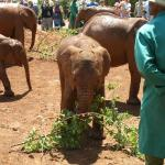 Photo of David Sheldrick Wildlife Trust