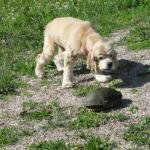 A dog and turtle show