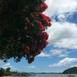 The beach across the road from Busby Manor Resort Paihia at Christmas time