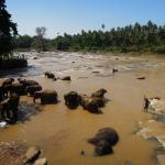 Photo de Pinnawala Elephant Orphanage