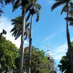 Palms & Mango Trees in Alajuela Central Plaza