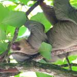Sloth / Wildlife