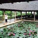 The lotus pond in the lobby