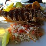Lunch (Snapper)