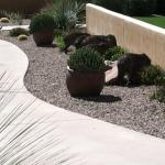 Javelina's on the grounds