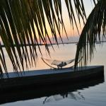 Couple laying on Hammock dockside sunset through the palms