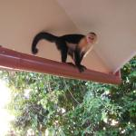 Monkey on my downspout
