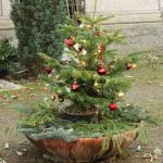 Christmas tree in the nice garden