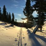 Cross Country Skiing at the Magic Hour!