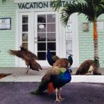 Space Coast Vacations