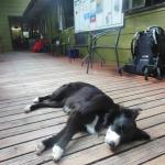 Cute hostel dog