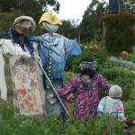 Foto de Melba Gully Cottage Flower Farm