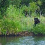 Saw a black bear while eating dinner right behind The Other Side.