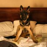 Klaus on the bed (temporarily)...