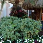hotel has great assortment of plants, talking birds, and of course palm trees