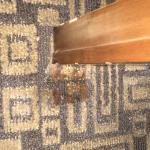 Moldy food stain on carpet.  Right next to bed.