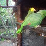 Parrots - Living next to the cat colony...they can purr...