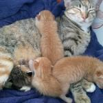 feral mom and kittens,the first of many