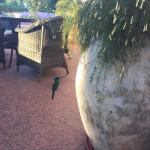 A humming bird in the terrace bar at the Cataratas Hotel