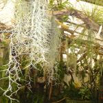 inside the orchid house
