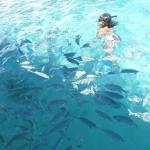schools of fish near the pier while snorkeling