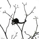 Had howler monkeys in our trees above the room
