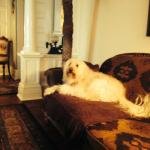 Relaxing in the living room with Sunny