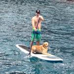 Paddleboarding with a Golden