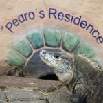 Say hi to Pedro for us!