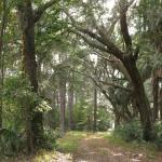 only secluded spanish moss path to be found