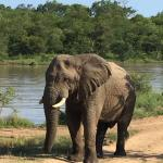 Φωτογραφία: Thornybush Game Lodge