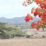 Lajas Valley and Flamboyants