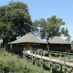 Bild från Wilderness Safaris Mombo Camp