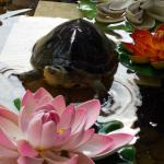Turtle that lives in the pond in the courtyard