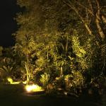 Garden by night