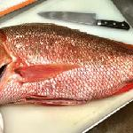 fresh snapper daily