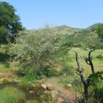 Φωτογραφία: Kwa Maritane Bush Lodge