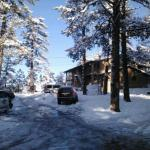 Motel in the Pines Foto